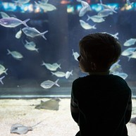 The North Carolina Aquarium at Pine Knoll Shores