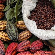 Visit a Chocolate Farm