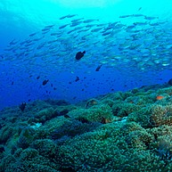 Scuba Diving And Snorkeling Tour