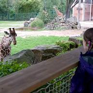 Zoo de Nuremberg