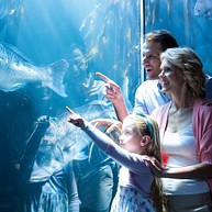 Shanghai Ocean Aquarium / 上海海洋水族馆