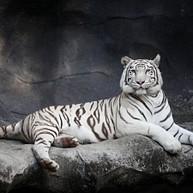 Chimelong Safari Park / 长隆野生动物世界