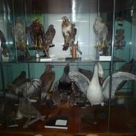 Hunting Museum