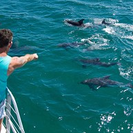 Dolphin Watch Cruises Jervis Bay