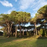 Parc naturel de San Rossore