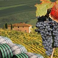 Le route des vins des collines de Pise