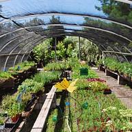 Morningsun Herb Farm