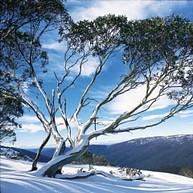 Selwyn Snowfields