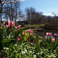 Sofiero slott och trädgårdar