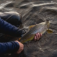Central Highlands Fly Fishing