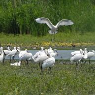 Vogelpark Hortobágy