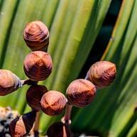 Nationaler Botanischer Garten von Namibia