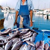 Fischmarkt Am Alten Hafen