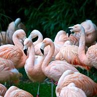 Zürich Zoo