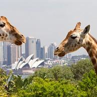 타롱가 동물원