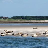 Amrum Island