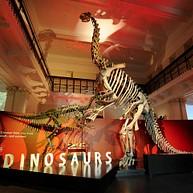 オーストラリア博物館 / Australian Museum