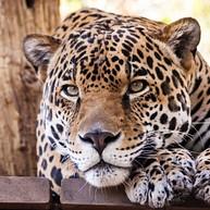 Palm Beach Zoo at Dreher Park