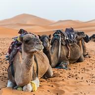 Aventures sur les hautes dunes rouges