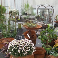 Orangeriet - bistro & garden