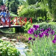 梅菲尔德花园 (Mayfield Garden)