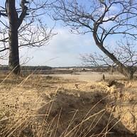 Loonse and Drunense Dunes - Heusden