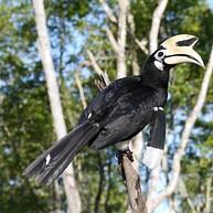 KKCBS - Kota Kinabalu City Bird Sanctuary