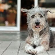 Animal Welfare Thrift Shop