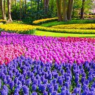 Parc Floral Keukenhof