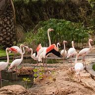 Parco Zoologico di Lagos