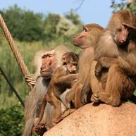 Kölner Zoo – Begeistert für Tiere