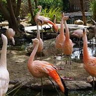 Reid Park Zoo