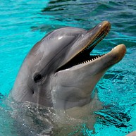 Delfiniti de México