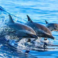 Blue Wave Adventures Dolphin Watching Tours