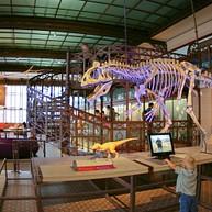 Museum voor Natuurwetenschappen van België, Brussel