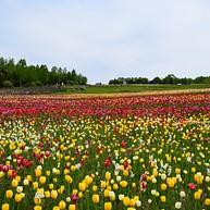 Takino Suzuran Hillside National Government Park