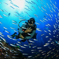 Scuba Diving and Snorkelling Tour