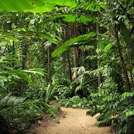 Cairns Botanische Gärten