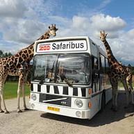 Safari im Bus