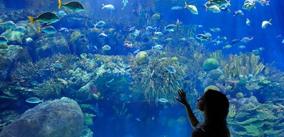 Blackpool Sealife Centre