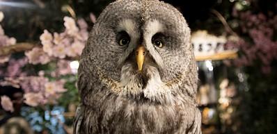 Fukuro No Iru Mori Owl Cafe