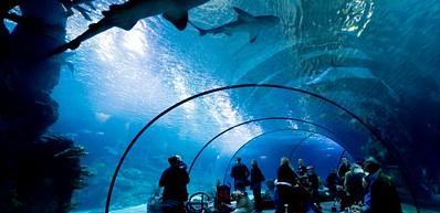 Lo zoo e l'oceanario