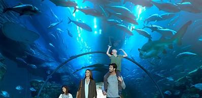 Acuario y zoológico submarino de Dubái