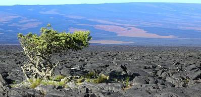 Kau Scenic Byway - The Slopes of Mauna Loa