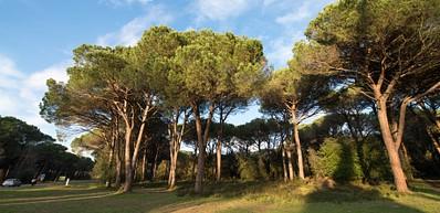 San Rossore nasjonalpark og gods.