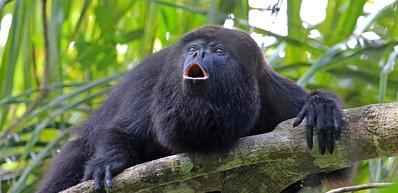 Chorcha Monkey Reserve