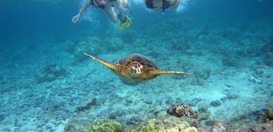 Aloha Kauai Tours