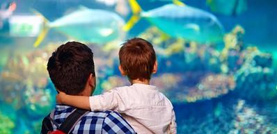 Aquarium de Fakieh