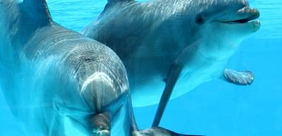 Delfin Insel Park