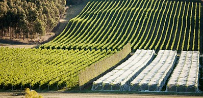Wine Route of The Tamar Valley